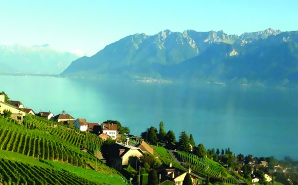 Swiss wines, pure excellence!