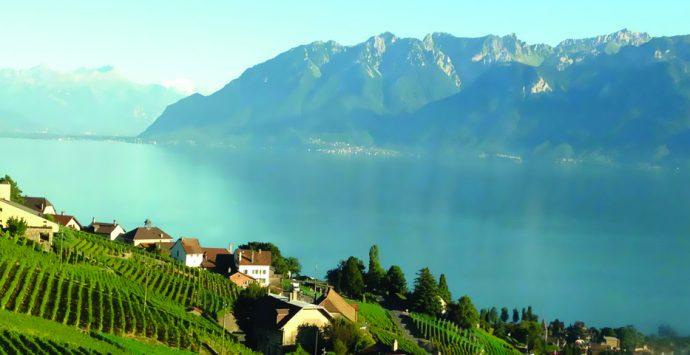 Les vins suisses, l'excellence!