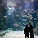 CP _M_Dagnino_Oceano_lagons_aux_requins