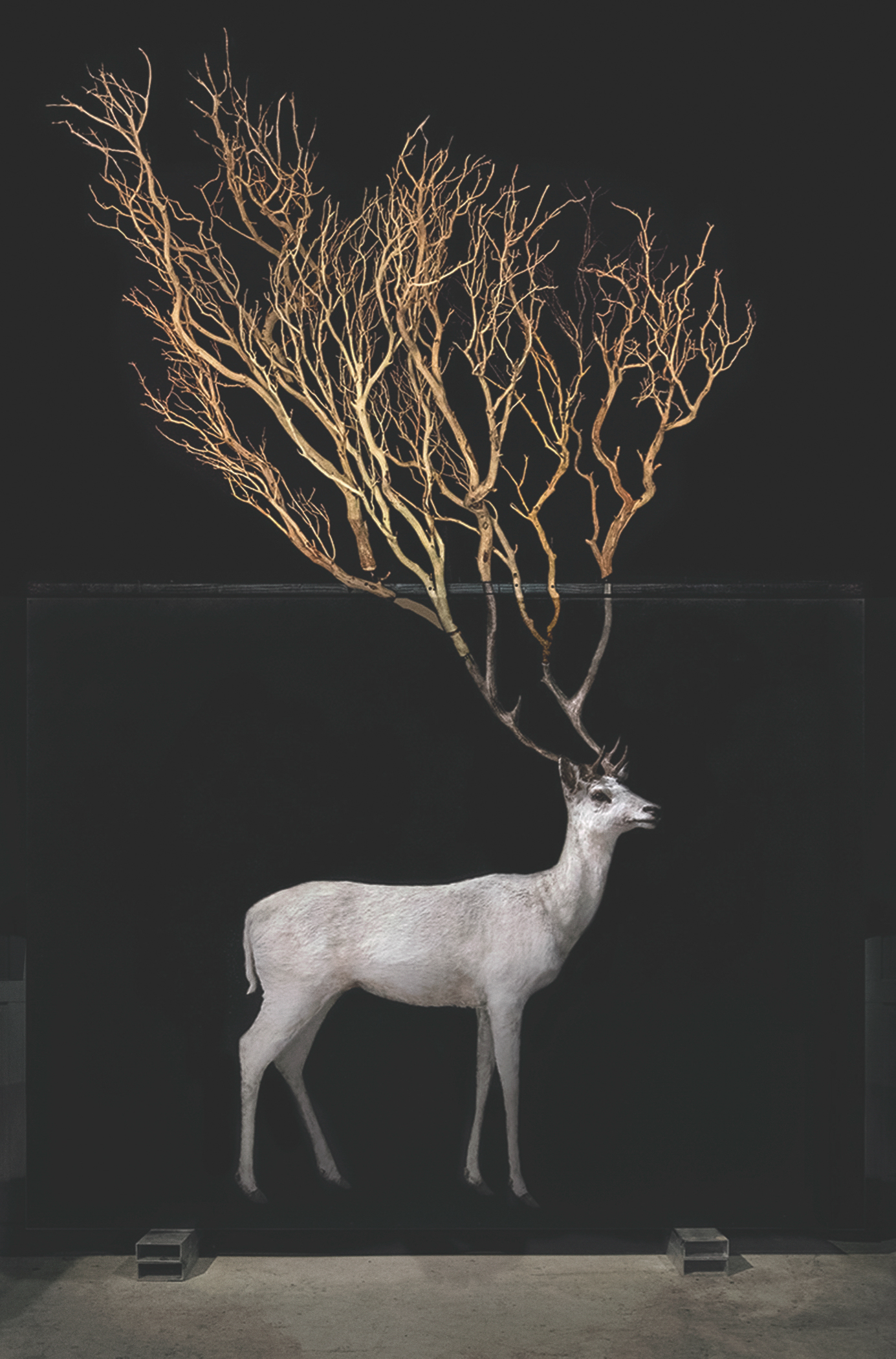 Todd_Murphy_Stag_Art_Central_HK, courtesy Mark Straus Gallery copie-2